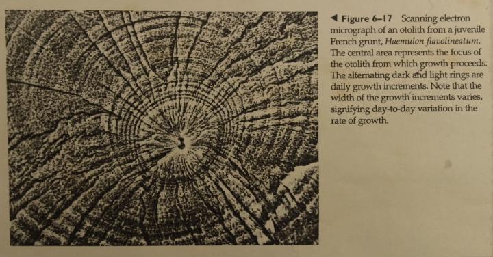 'Vertebrate Life' (F Harvey Pough & Christine M Janis)